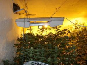 Policie odhalila v rodinném domě v Plzni pěstírnu konopí