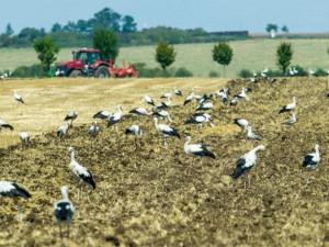 Farmáře v Plzeňském kraji přemnožení hraboši zatím netrápí