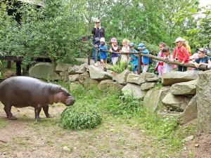 Plzeňská zoo zažila skvělý srpen, přišlo o dvacet tisíc lidí víc než loni
