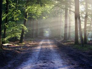 Dobřanské lesy, jež léta přinášely zisk, skončí v rekordní ztrátě