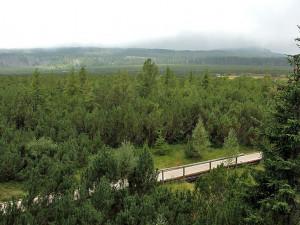 Sousední parky Šumava a Bavorský les pět let spolupracují