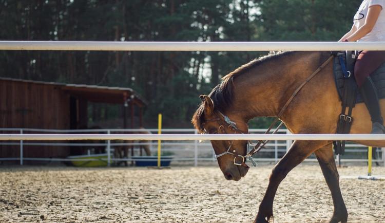 Na koňské farmě uhynul kůň a dva jsou nemocní, podle majitelů je někdo otrávil. Prověřuje to policie