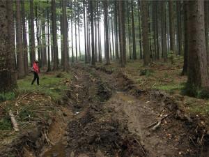 FOTO: Inspekce pokutuje firmu za poškození půdy při těžbě v CHKO Český les