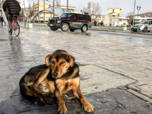 DRBNA NA CESTÁCH: Mitrovica - město rozdělené mostem i národní hrdostí