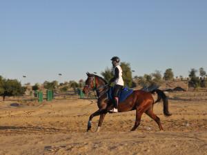 Anna Buštová: Skloubit studium a koně není jednoduché, ale vedení školy i učitelé mi vychází vstříc