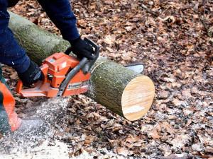 Tragédie v lese, muže tam při práci usmrtil padající strom