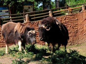 Venkovní expozice zpřístupní od pondělí 27. dubna plzeňská zoo, navštívit lze i DinoPark