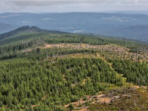 Projděte se šumavskou divočinou s průvodcem, navštívit můžete vlky i bobry
