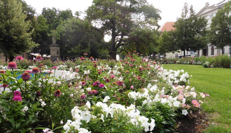 Sadový okruh v centru Plzně je plný květin, poprvé se objevila i okrasná zelenina