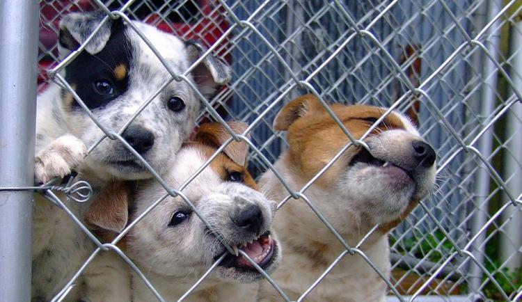 Tyranům zvířat hrozí vyšší tresty, za provozování množíren až deset let vězení