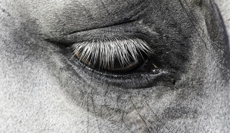 Pracovní úraz veterináře, kůň ho kopl do hlavy