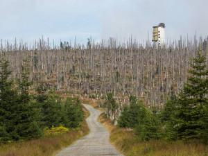 Na Šumavě odtěží obrovské množství dřeva jako po orkánu Kyrill, kůrovce zatím brzdí počasí
