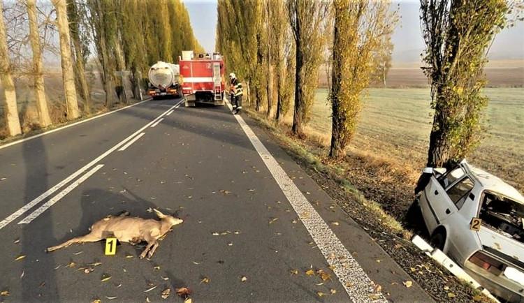 Srážek se zvěří v kraji přibývá. Řidiči často neví, co v takové situaci dělat a chybují