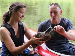Záchrana plzeňského kačera s hlavou prostřelenou šípem zaujala i zahraniční média