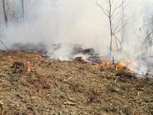Meteorologové pro příští dny varují před vlnou veder i před nebezpečím vzniku požárů