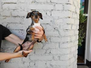 Jsme národ pejskařů, mnozí si ale neumí psa správně pořídit