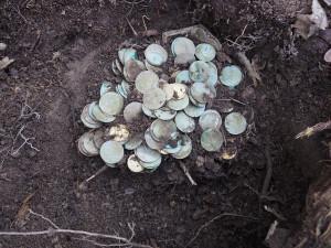 Milionový poklad stříbrných mincí na Tachovsku vyryla ze země divoká prasata