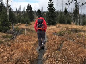 Pro rozvoj Šumavy a Bavorského lesa vznikají společné česko-německé projekty