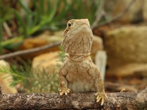 Sucho ve skleníku plzeňské zoologické zahrady, nová expozice ukáže život na poušti