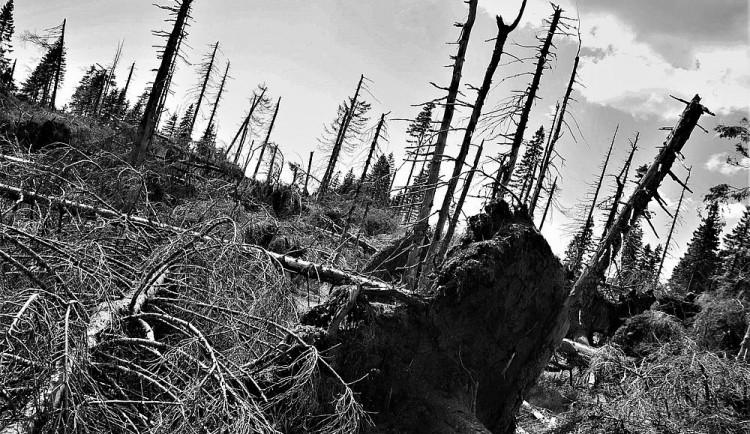 Černý den pro Šumavu! Přesně před 150 lety ji zdevastovala ničivá vichřice
