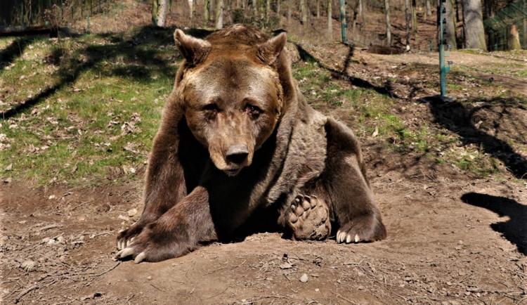 Pišta odešel do medvědího nebe, plzeňská zoo tak přišla o nejdéle chovaného savce