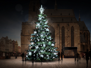 Vánoční strom pro plzeňské náměstí Republiky zatím roste v Kařezu, jde o jedli bělokorou