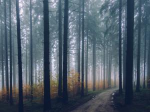 Plzeňskému kraji patří třetí místo s nejvyšším podílem lesů ze 14 krajů ČR