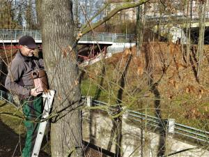 Obnovený Lochotínský park má nově na stromech i 26 bytelných ptačích budek