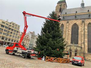 V plném proudu je už zdobení vánočního stromu na plzeňském náměstí Republiky