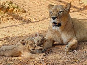 Koronavirová pandemie nastartovala v plzeňské zoo rekordní počet adopcí zvířat