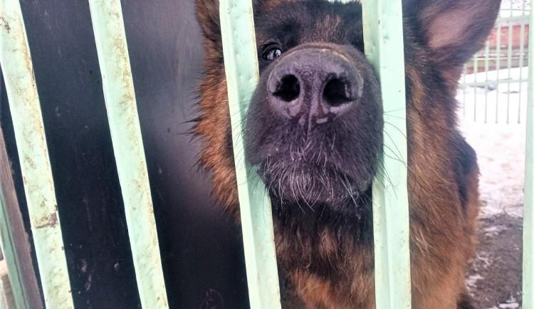 Stav zachráněných psů z Malesic se pomalu zlepšuje, brzy budou moci hledat nový domov
