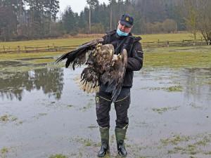 Lidé z celého Česka posílají do Plzně peníze na pátrání po traviči čtyř orlů mořských