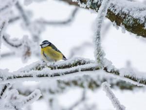 Nejvíce mrzlo v západních Čechách, meteostanice naměřily i minus 27 stupňů