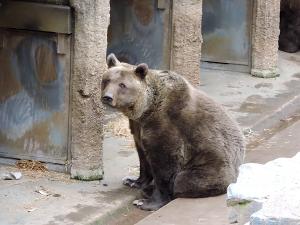 Vstávat, ospalci! Plzeňští medvědi se probudili ze zimního spánku