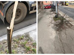 Vandalové se vyřádili na mladém javoru, poškozují také lavičky a dětská hřiště