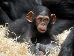 Zoo Plzeň uvítá, pokud bude moci otevřít, čeká se na přesné podmínky