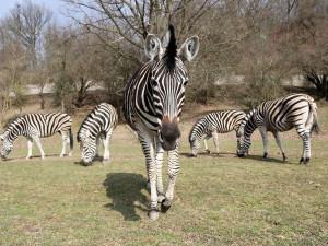 I přes nepřízeň počasí přivítala plzeňská zoo více než stovku návštěvníků