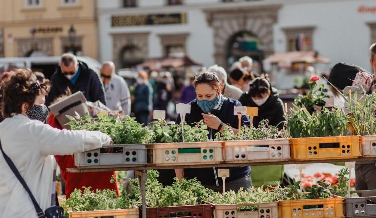 Farmářské trhy se vrací na náměstí v Plzni, stánků bude zatím o něco méně