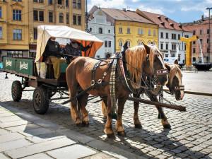 Pivovarský povoz v Plzni nepřerušil jízdy v pandemii ani na den, pivo ale nevozí