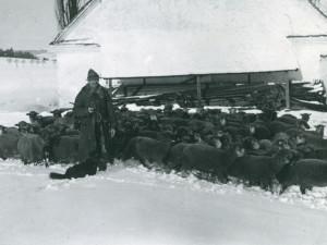 Uznávaní veterináři, léčitelé a lidoví mágové. Pastýři zastávali hned několik důležitých pozic
