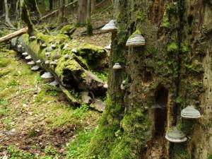 Malá přírodní rezervace nepřestává překvapovat, odborníci tam objevili kriticky ohrožené druhy