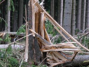 Po bouřích vstup zakázán: Větrem poškozené stromy ohrožují všechny návštěvníky lesů