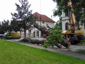Kvůli nebezpečnému stromu se musela uzavřít část ulice, pokácet ho přijela těžká technika