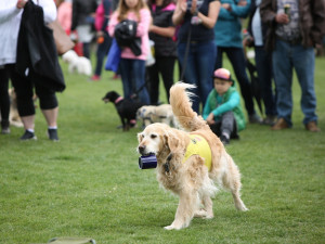 TIPY NA VÍKEND: Akce pro milovníky zvířat i festival piva a polévek