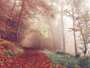 Sbohem léto, dnes nastává podzimní rovnodennost a začíná astronomický podzim