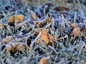 Meteorologové varují před prvními přízemními mrazíky, mohou poškodit vegetaci