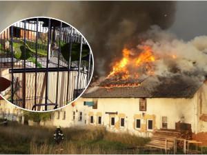 S rozsáhlým požárem výrobny briket bojovalo 14 jednotek hasičů, z hořícího objektu zachránili čtyři papoušky