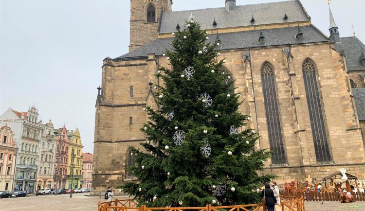 FOTOGALERIE: Vánoční strom
