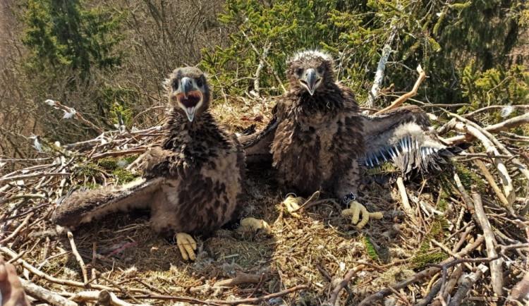 FOTOGALERIE: Kontrola hnízd orlů mořských